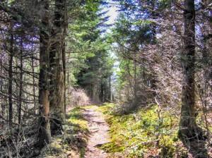 Ξενώνας Βικτώρια - Λουτρά Αμαράντου - Δραστηριότητες: Διαδρομή 4x4