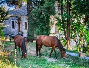 Ξενώνας Βικτώρια - Λουτρά Αμαράντου - Δραστηριότητα: ιππασία