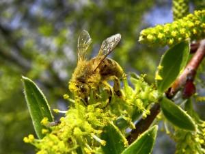 Ξενώνας Βικτώρια - Λουτρά Αμαράντου - Δραστηριότητες: Μελισσοκομία